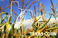 Texas Corn
