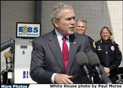 Alabama Bush