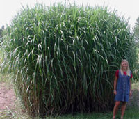 how to make ethanol from switchgrass