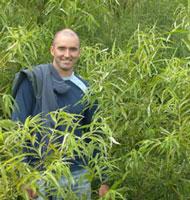 shrubby willow