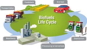 DOE Biofuels graphic