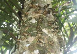 gator tree