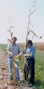 Earless Corn