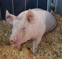 2010 world pork expo